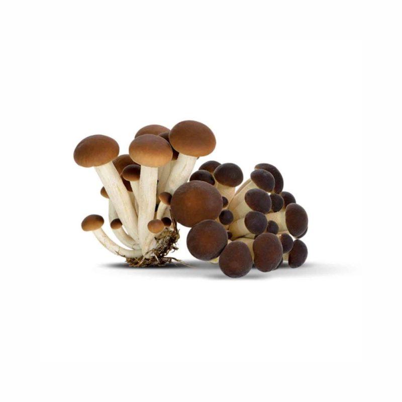 GreenFood Funghi Chiodini sfusi