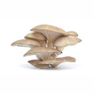 GreenFood Funghi Pleurotus