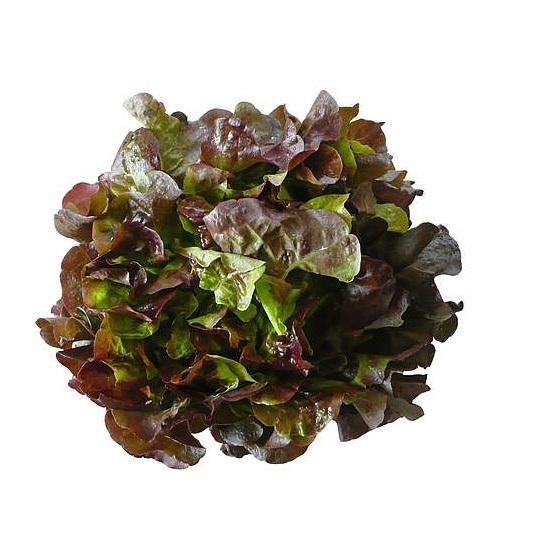 greenfood foglia di quercia