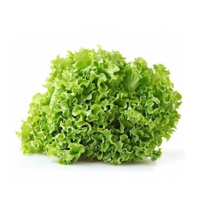 greenfood insalata gentilina