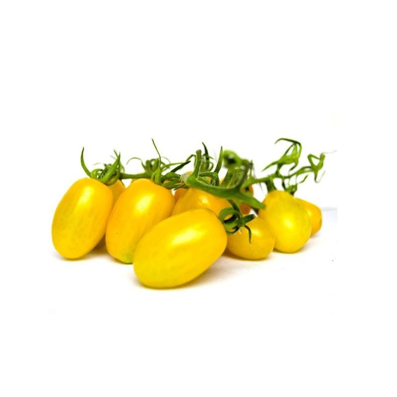 greenfood pomodoro datterino giallo